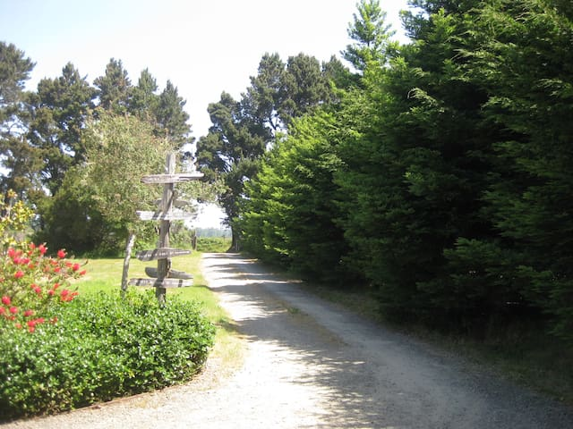 Driveway and Adjacent Meadow