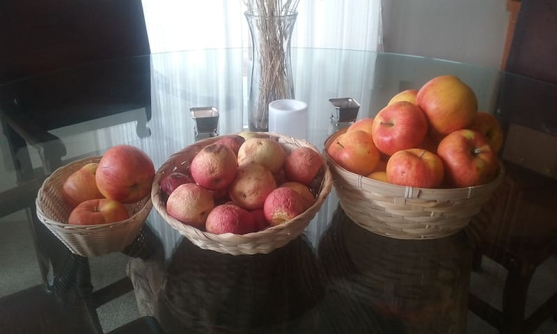 Many varieties of apples, the Cameo white flesh makes a delicious apple mousse served in fried spiced potato cups. A favorite hors d'oeuvre of Farm to Table Community Diners.