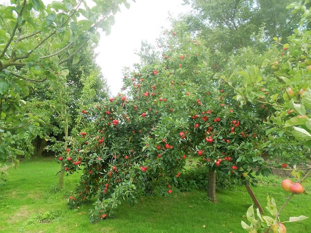 The Orchard with apple trees