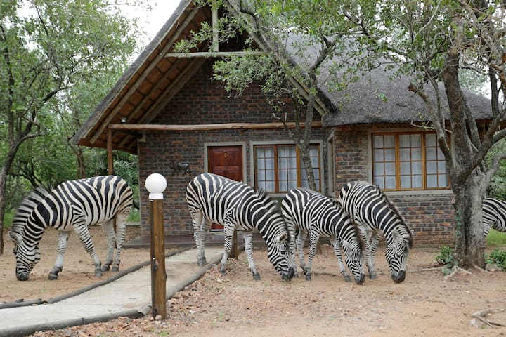Zebras outside Bungalow 3, 50 sqm of luxury and comfort awaiting your visit
