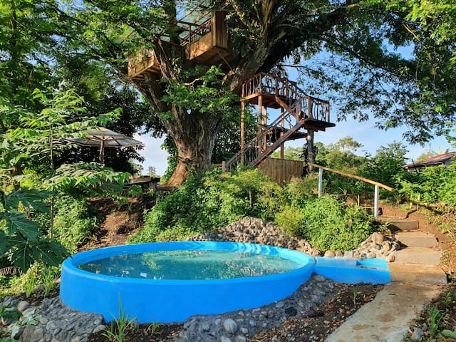 House on a Centennial Acacia with pool and forest