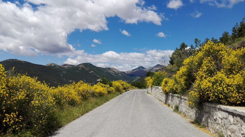 On the way to Calascio (furzes in bloom, June/July)