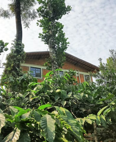 Private suite at a Coorg coffee plantation