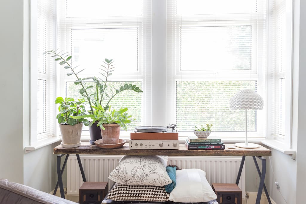 Lovely houseplants help keep the indoor air clean and healthy