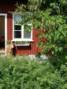 Charming cottage close to lake-canoe included