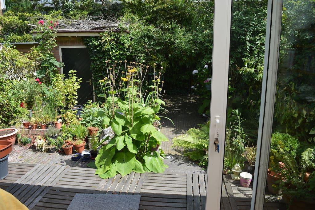 Looking into the backgarden through open sliding door