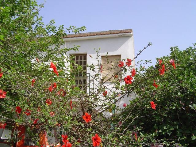 Casamare55 - campofelice di roccella - Vila