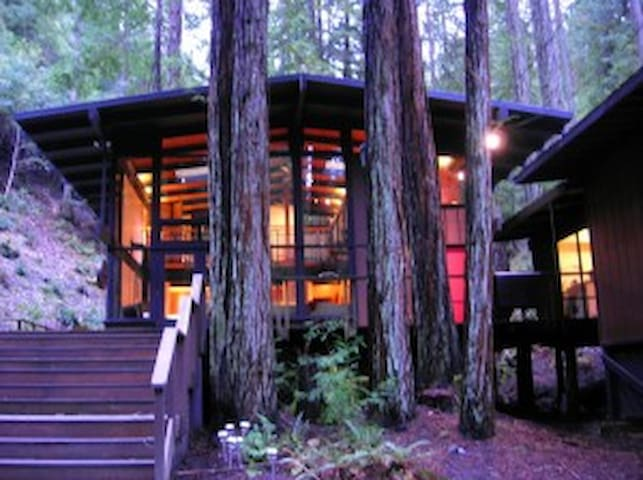 Magical Redwood Retreat - Sebastopol - Casa