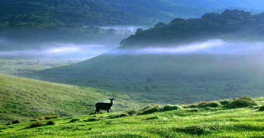 Adventure Bus - Horton Plains