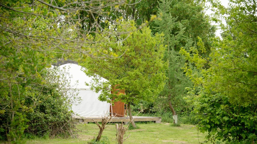 The yurts are hidden in the trees
