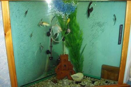 Отличная квартира для семьи!! - Бишкек