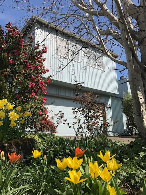 Abundant flowers surround our home.