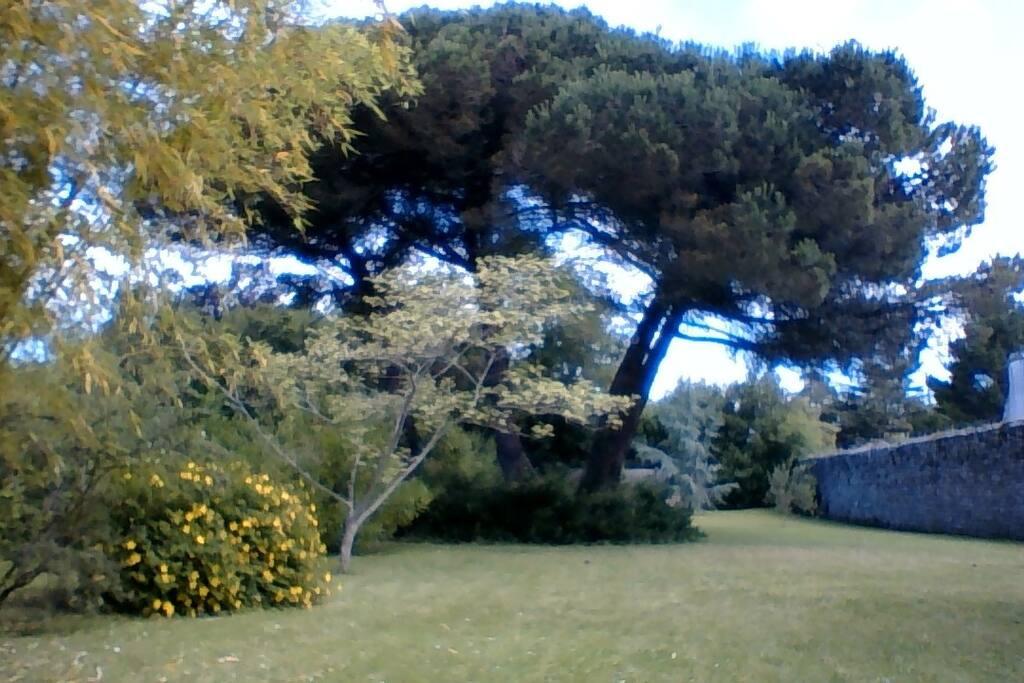 le jardin, derrière la maison, clos d'un haut mur de pierre