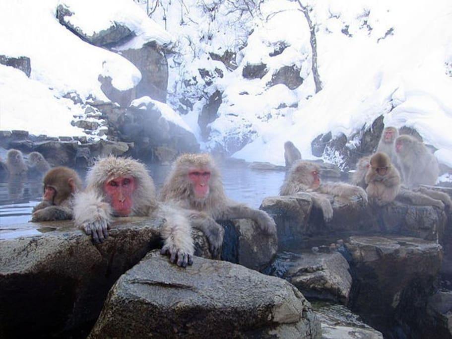 Snow monkey at Jigokudani Yaen kouen