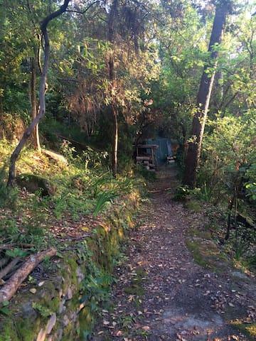 Il sentiero nel bosco