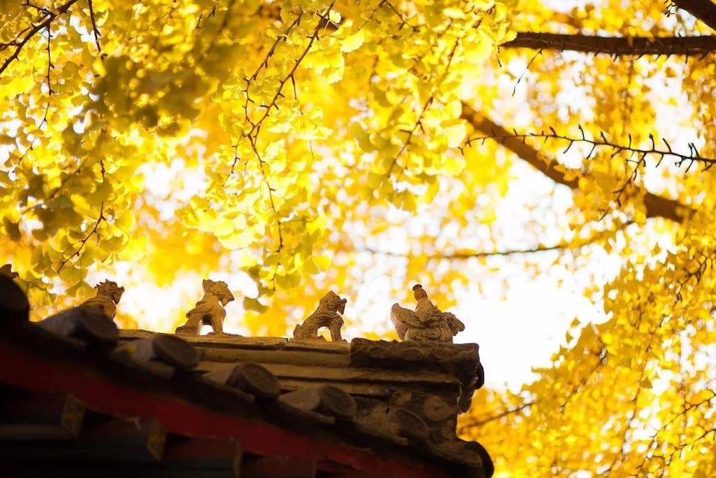 秋天是北京最美的季节,栖木堂四合院带您领略老北京怡人秋季