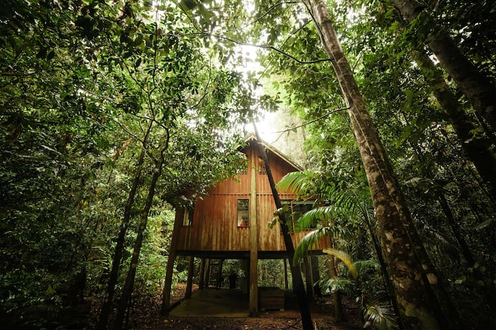 Two bedroom Treehouse in 100 acres of private Rainforest
