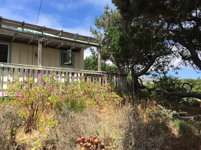 The Dune at Salmon Creek - Bodega Bay - Bungalow
