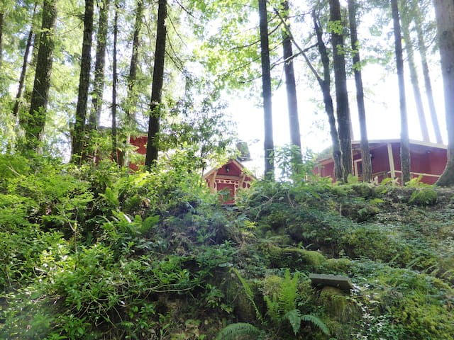 Towering Doug Fir, Cedar and Yew trees surround the property, which sits on a small ridge with only one direct neighbor.
