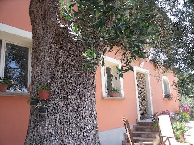 Perfect location for your holidays - Ascea - Appartement