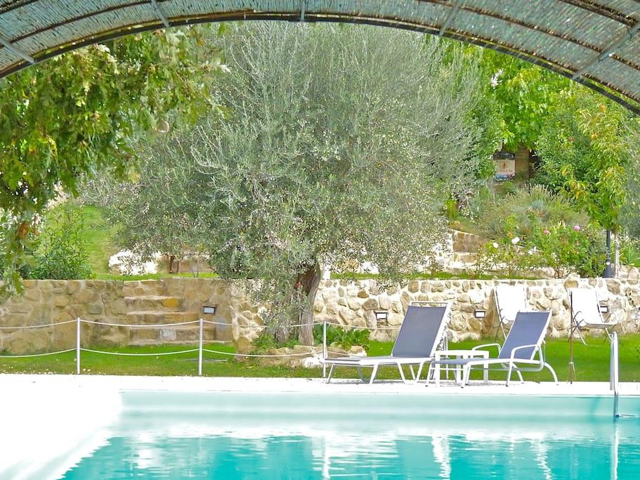 external swimming pool - piscina esterna