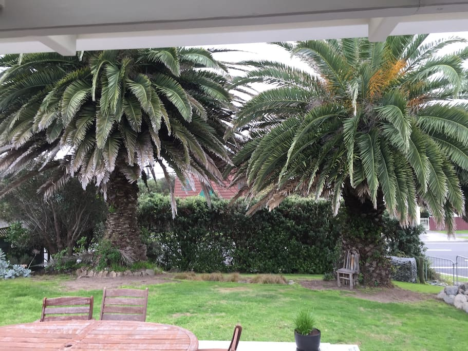 Twin palms at the front of the property
