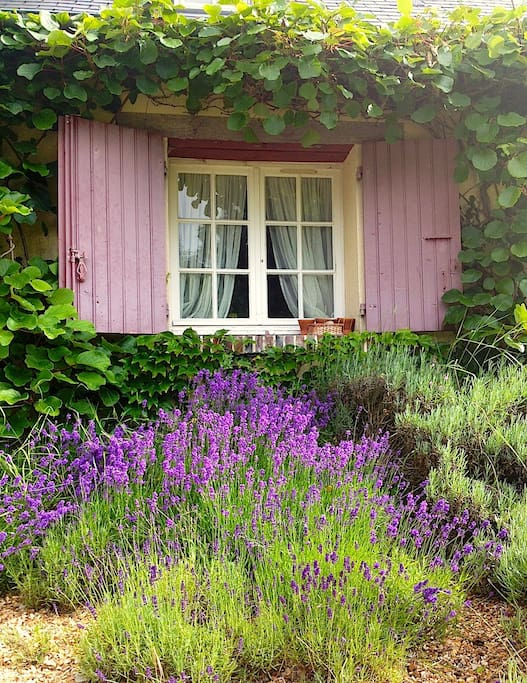 Fenêtre de l'une des deux chambres, nichée dans la verdure