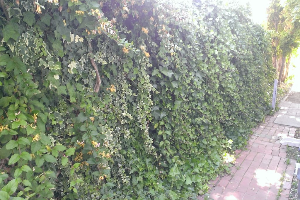 The Great Green Wall of Wonder