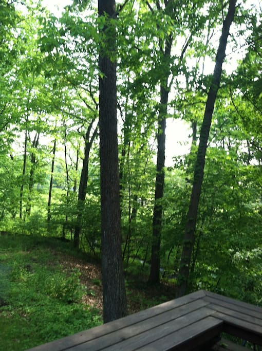 A view off the deck