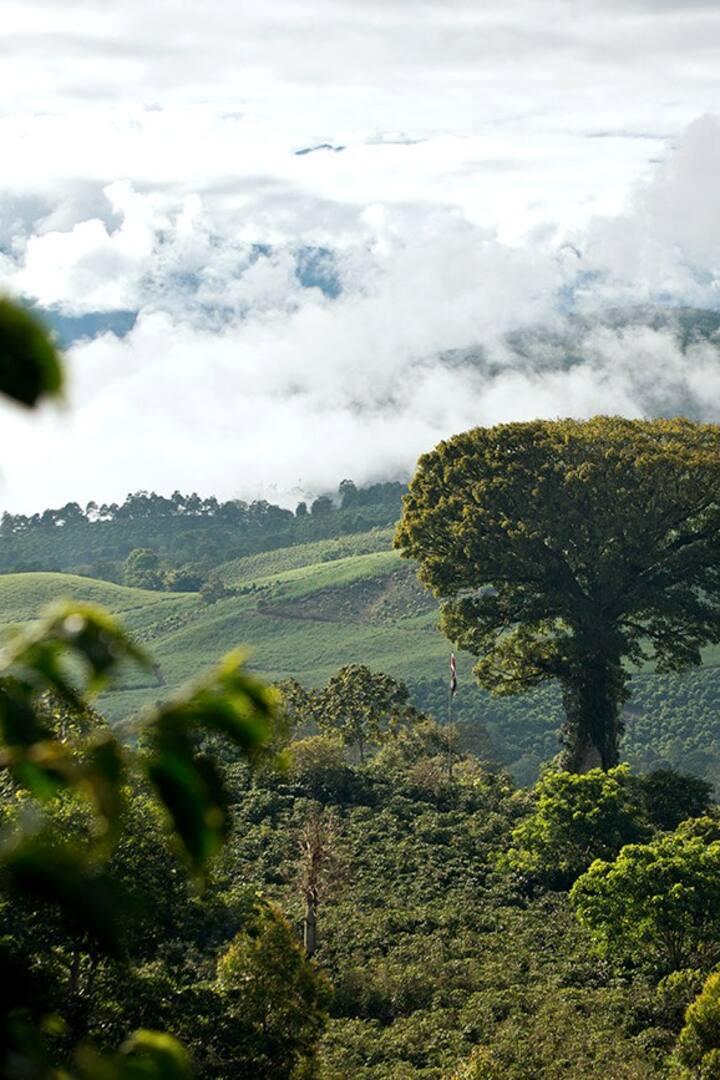 The amazing Ceiba tree
