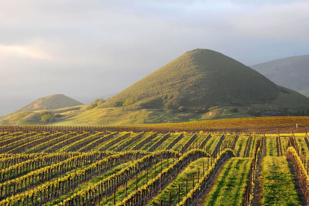 Islay Hill and some of the vineyards found in Edna Valley just South of San Luis Obispo