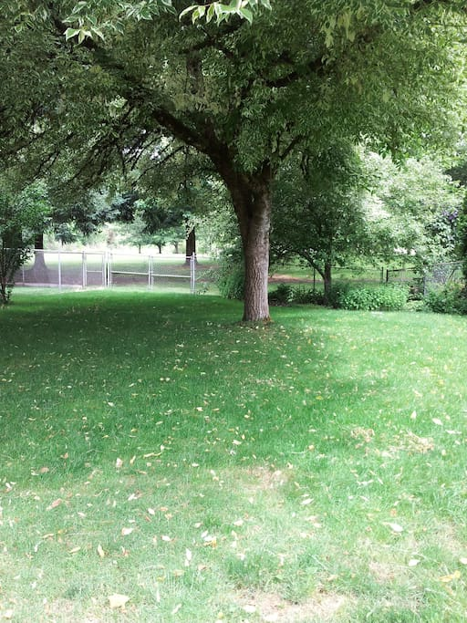 Back yard with park. Fenced for dogs. Beaver marsh walking distance.