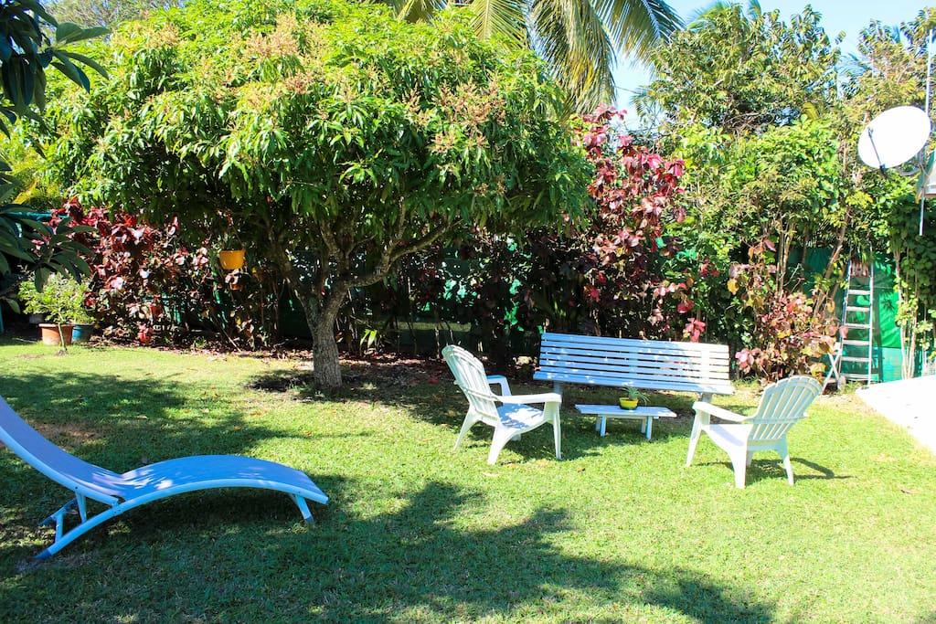 Dans ce jardin tropical arboré, vous pourrez profiter du Soleil en dégustant un Ti Punch