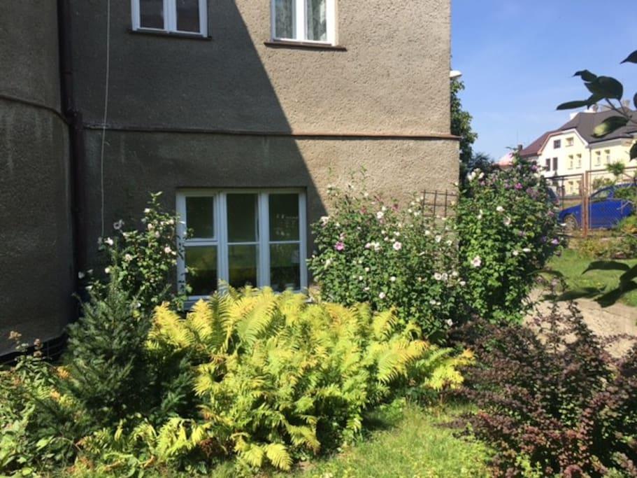 Window into the garden / Okno do zahrady