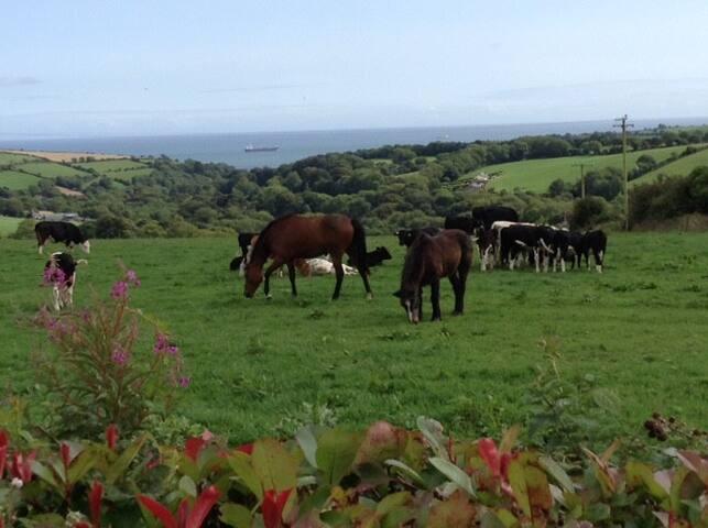 Atlantic View - Modern Bungalow