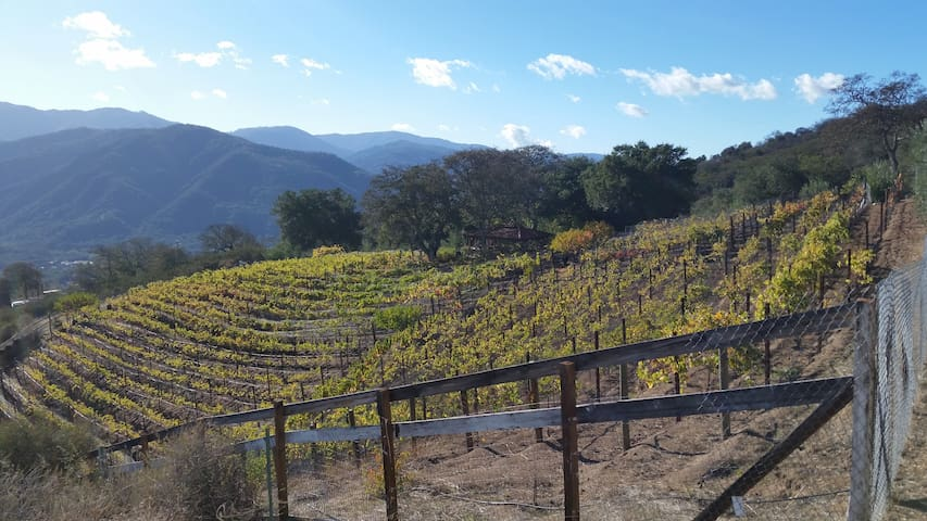 Dakota Ranch Vineyard - Carmel Valley - Hus
