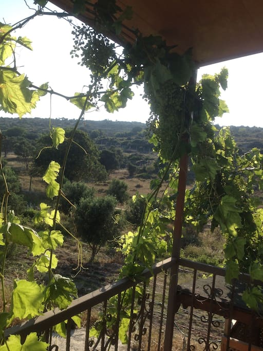 Second Floor Landing with Olive Tree view and Grape leaves.