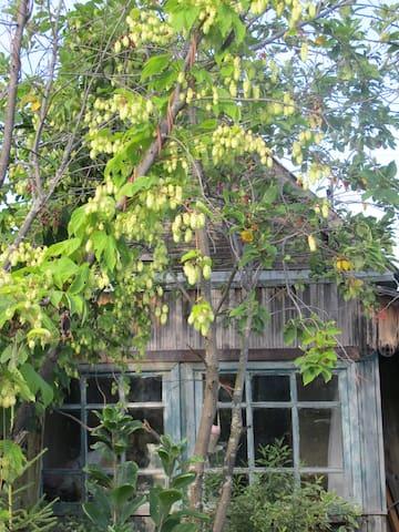 Крошечный домик на садовом участке! - Novosibirsk - Maja
