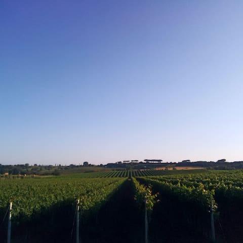 The vineyards - Roman countryside
