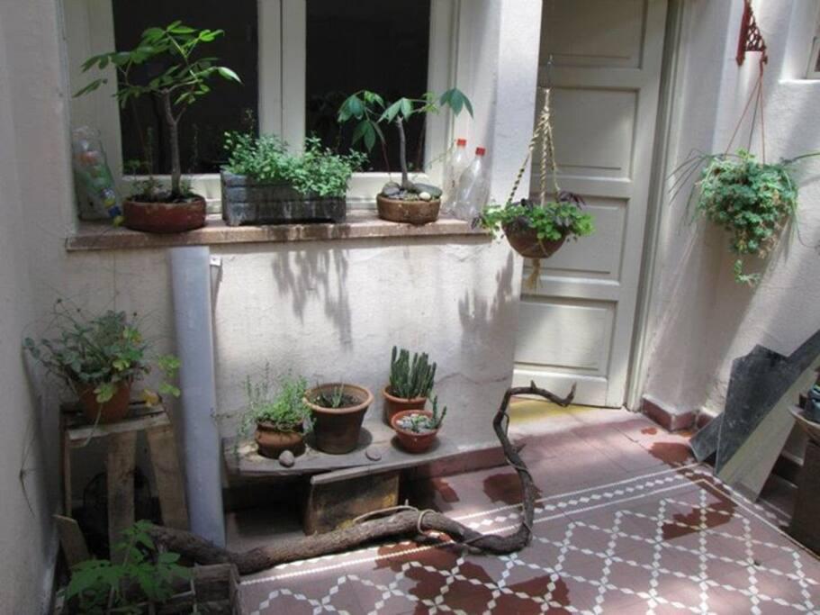 Patio interno ideal para fumar algo o tomar una bebida mientras ves las plantas.