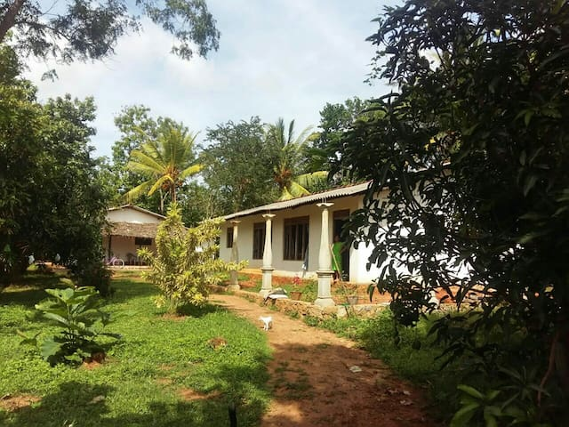 Mango Tree Home Stay - Sigiriya - Huoneisto