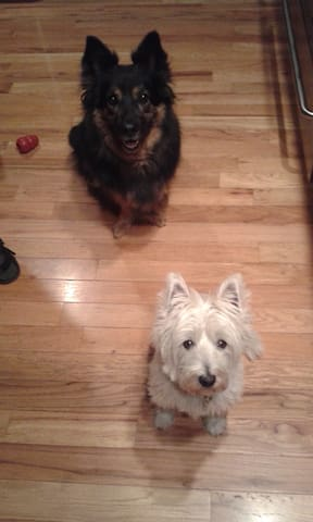Resident dogs - Millie and Lucille