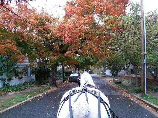 You can enjoy a beautiful ride through fall colors!