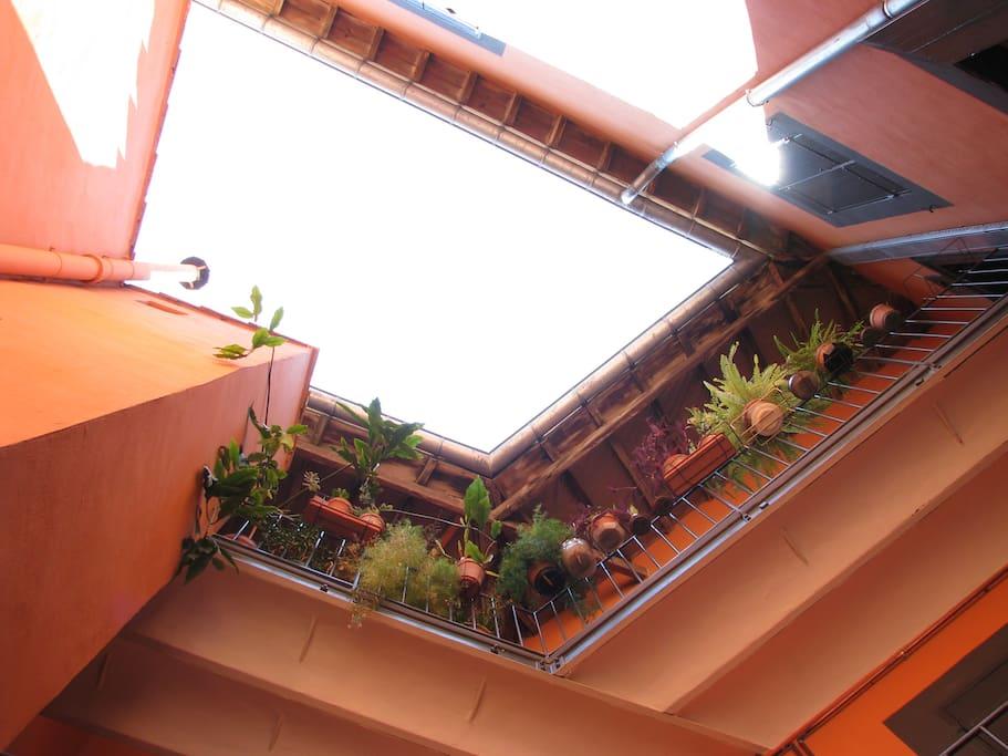 Verdure sur la cage d'éscalier