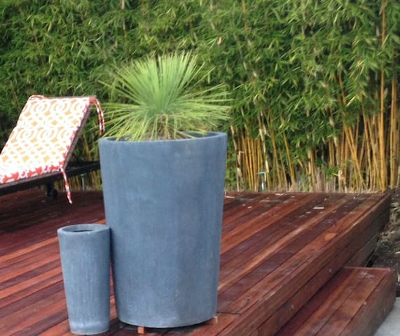 tropical plants throughout yard