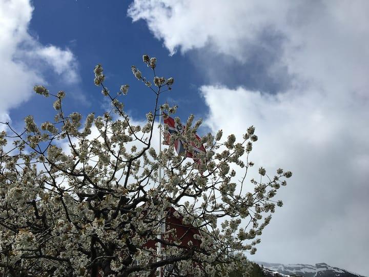 Koseleg krypinn  blant frukttre, fjord og fjell