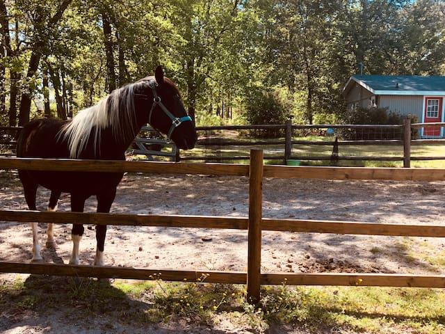 Cozy 1Bdr, 1 bath Cottage on 8 acre horse Farm