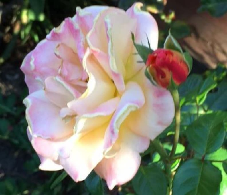 We have a pretty rose garden where you can sit.