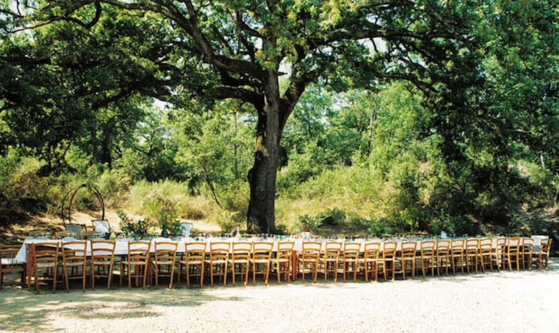 Large wedding under the trees with traditional Tuscan food. Check Instagram feed (@laselvatuscanvilla) for more wedding photos and videos