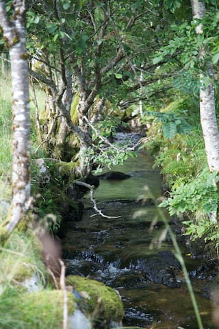 The Creek on Our land, leading to a Nice lake where you can Fish trout and swim.